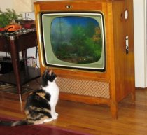 tv fishtank