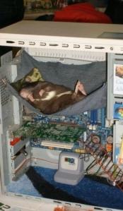 animal computer hamster 071