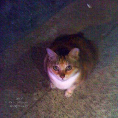 stray cat 2013 0208 DSC01950