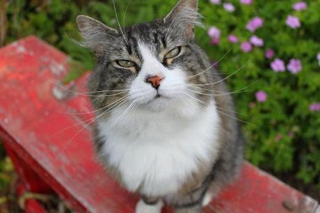animal cat Hello Im Pretending To Be Nice by SmmurrsieButt small