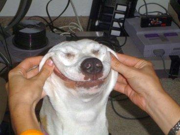 logo forced dog smile 24252