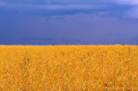 The flag of Ukraine (via Imgur)