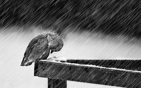 photo bird rain c4c