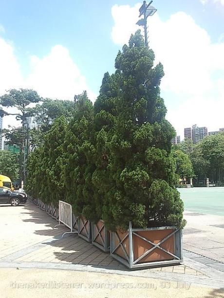 trees in victoria park DSC3797 2014-0702